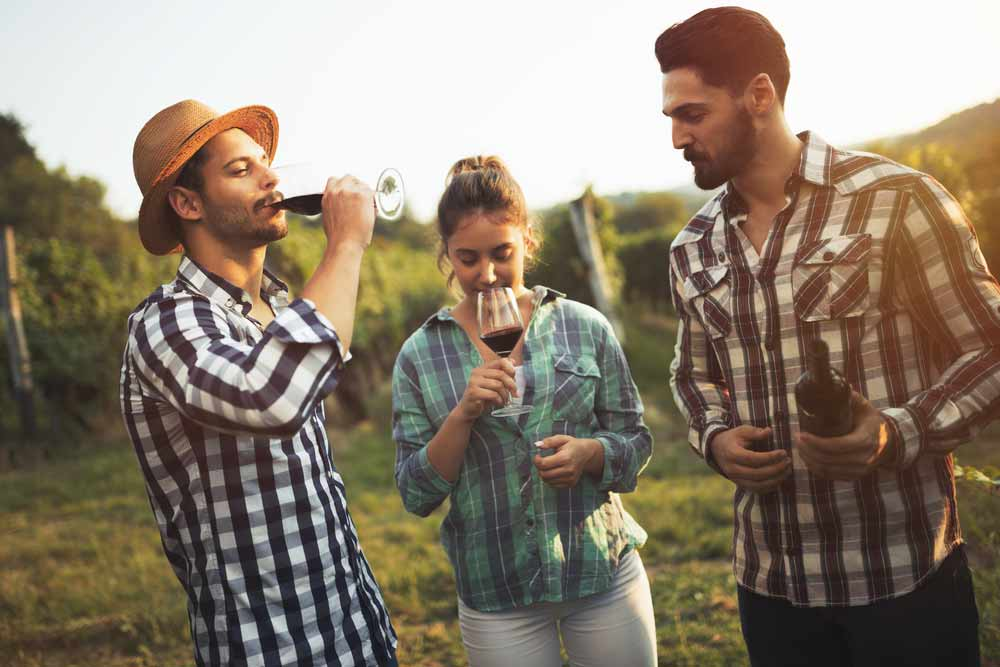 The Cape Winelands' Unique Wine-tasting And Pairing Experiences photo