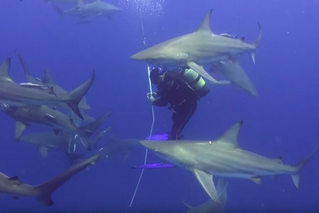 Watch: Diving With Sharks In South Africa photo
