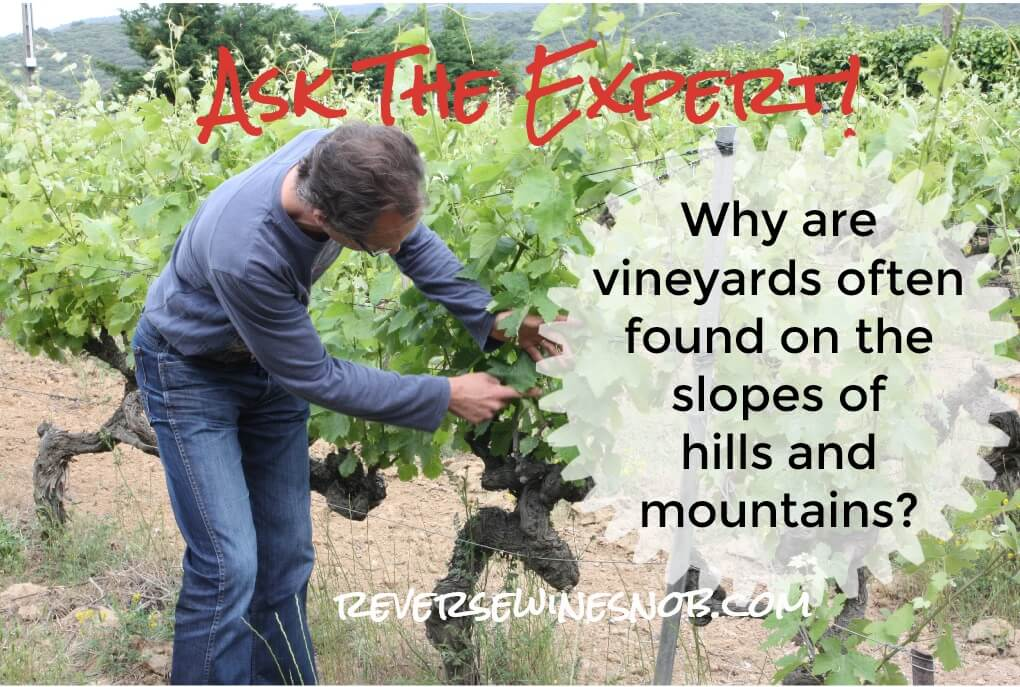 Why Are Vineyards Often Found On The Slopes Of Hills And Mountains? photo