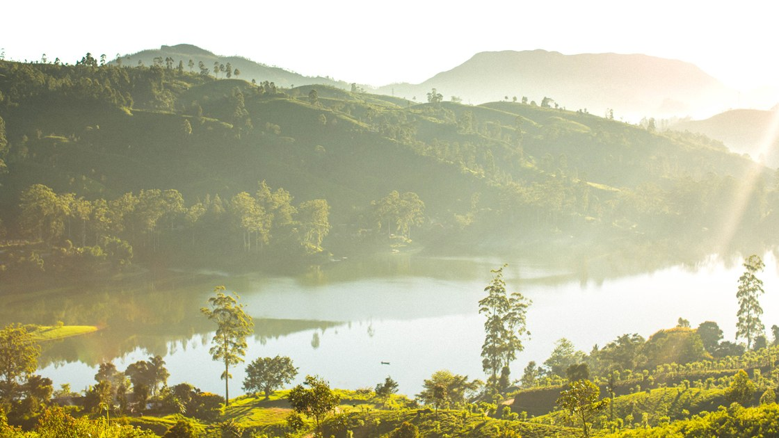 Ceylon Silver Tips And Temple-topped Mountains: An Insider's Guide To Sri Lanka's Tea Country photo
