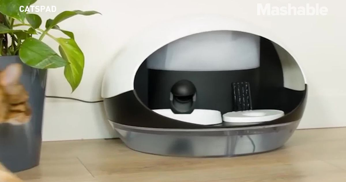 Finally, An Automatic Food And Water Dispenser For Your Cat photo