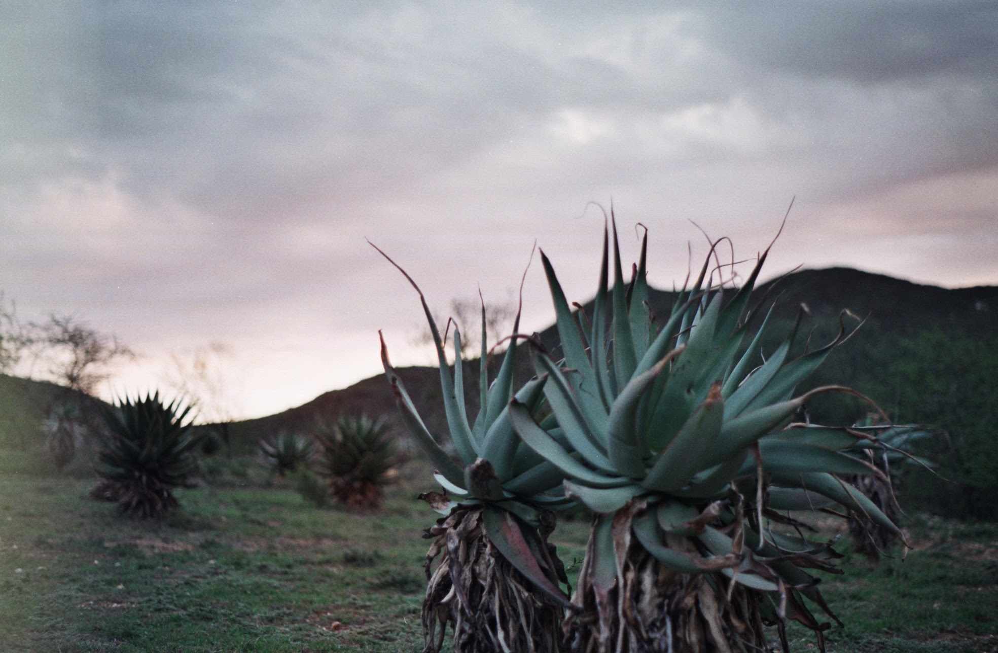 A Road Trip From The Garden Route To The Klein Karoo photo