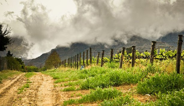 Rich Pickings At The Winelands Harvest Festivals In And Around Cape Town photo