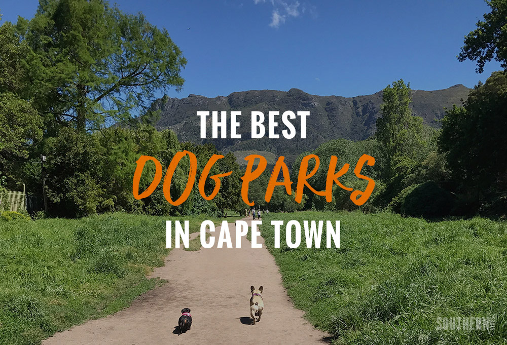 The Best Dog Parks In Cape Town And Other Places To Take Your Dogs photo
