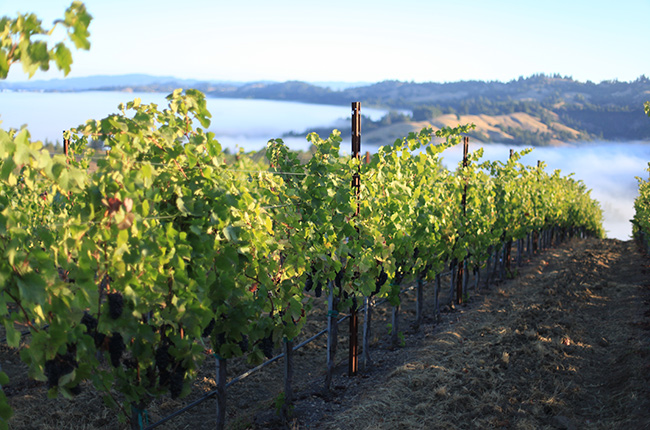 The Risk-takers: The Realities Of Buying A Vineyard photo
