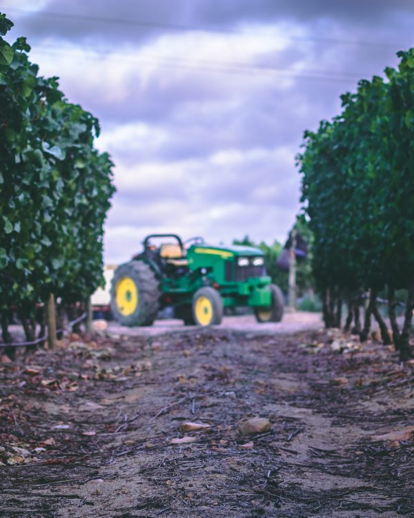 Boschendal Harvest Update: Challenging but exciting times lie ahead photo