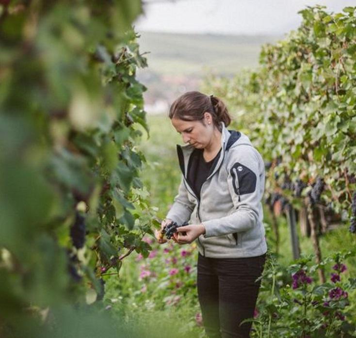 Nachhaltiger Weinbau, Wozu? photo