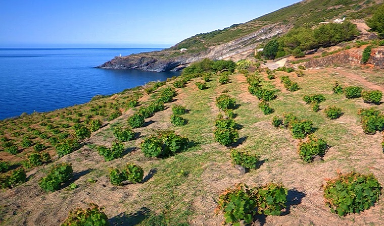 Unesco World Heritage Wine Regions To Visit photo