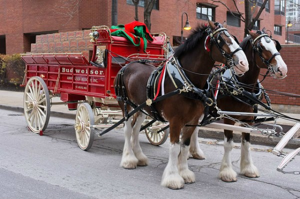 The Budweiser Clydesdales Aren't In This Year's Super Bowl Commercial. Here's Why. photo