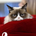 Grumpy Cat wins £500000 payout over coffee company using her image photo