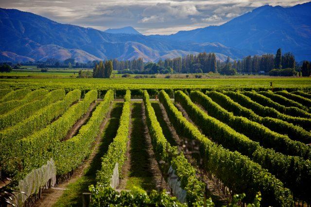 New Zealand Eyes Premium Low Alcohol Wine Sector photo