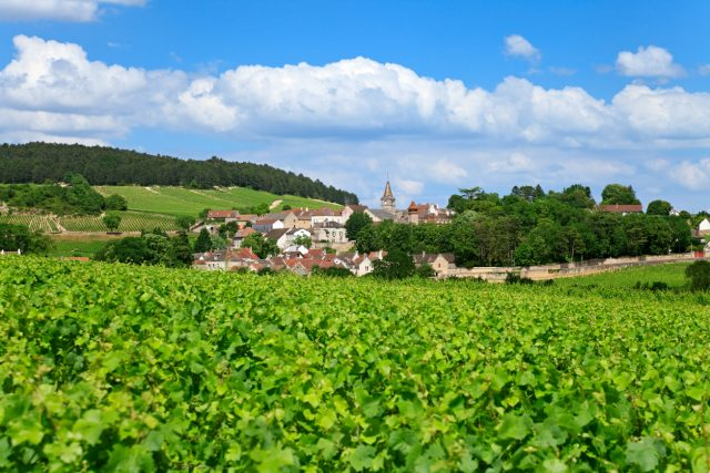 Burgundy 2016: ?classic?, Pure And Pitifully Small photo