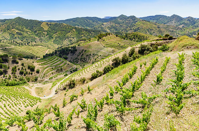 Jefford On Monday: To Cru Or Not To Cru photo