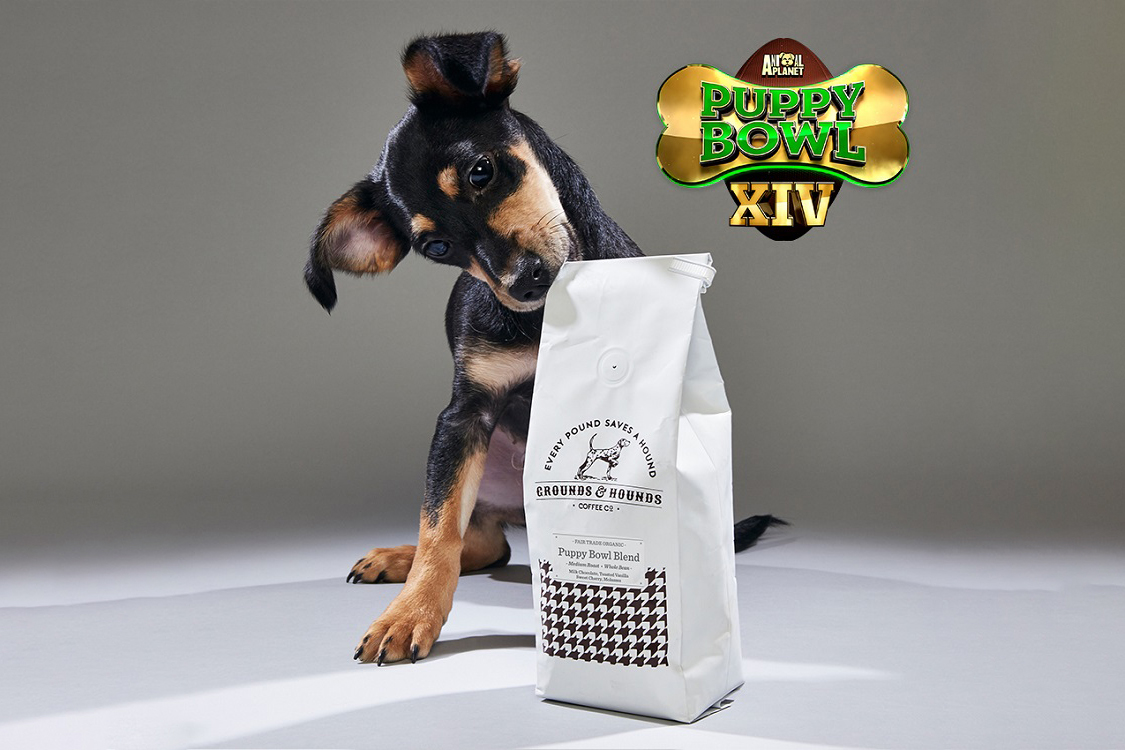 The Puppy Bowl Now Has An Official Coffee photo