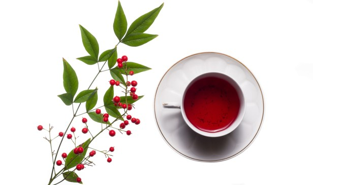 7 Health Benefits Of Sipping Rooibos Tea photo
