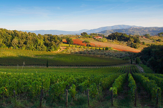 Travel: Top Bolgheri Wineries To Visit photo