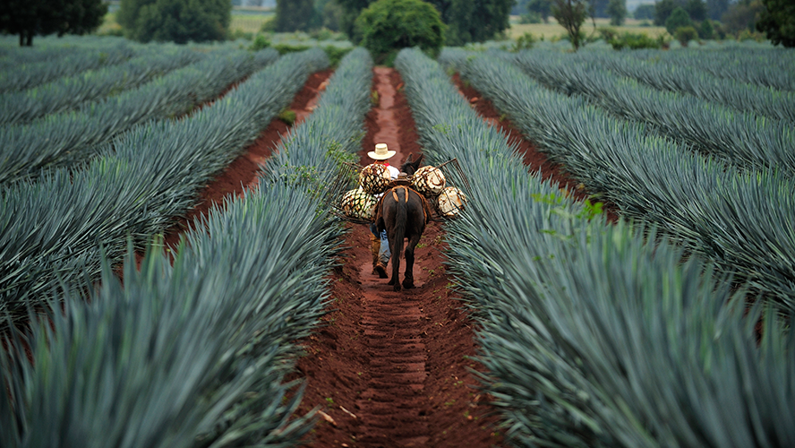 Tu Tequila Ya No Es El Mismo, ¿qué Le Hicieron? photo