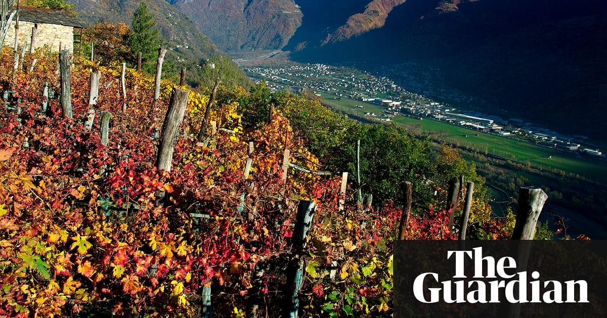 Wines With Altitude photo