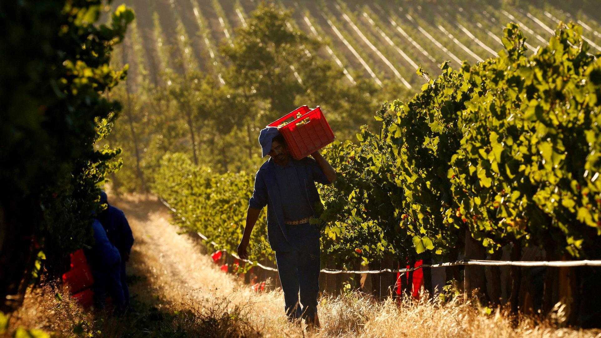 Kapstadt: Winzer Bangen Um Ihren Job photo
