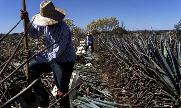 Ay Caramba! World Faces Tequila Shortage photo