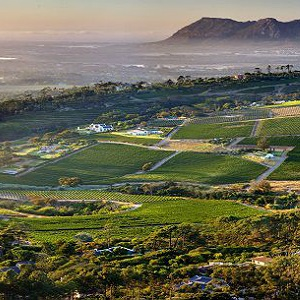 3 Wine Farms In The Constantia Valley You Need To Visit photo