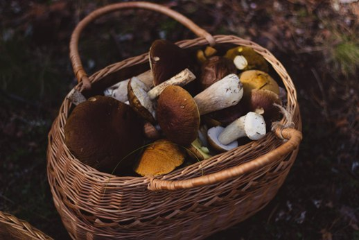 Take A Trip On The Wild Side With A Delheim Mushroom Forage Pop Up photo