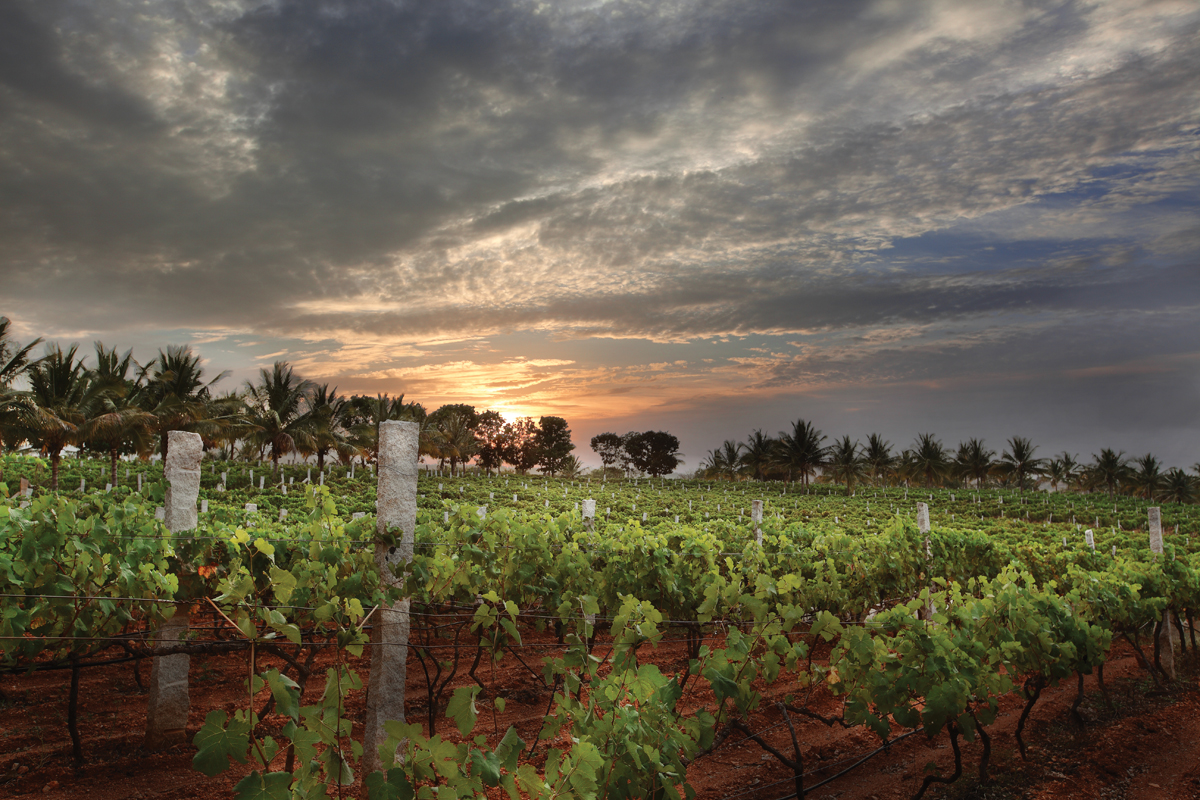 Indian Winery, Grover Zampa Vineyards, Wins Winery of the Year photo