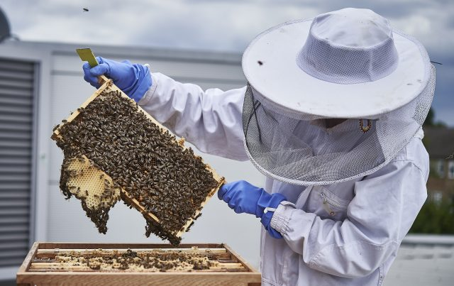 Private Passions: To Bee Or Not To Bee? photo