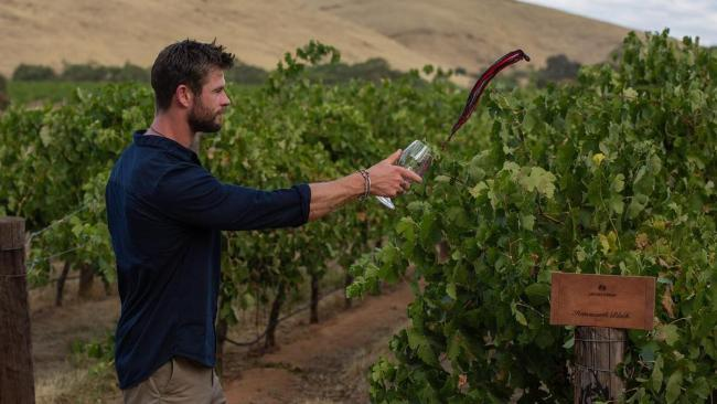 Chris Hemsworth blends his own shiraz at Jacob`s Creek winery in Barossa Valley photo