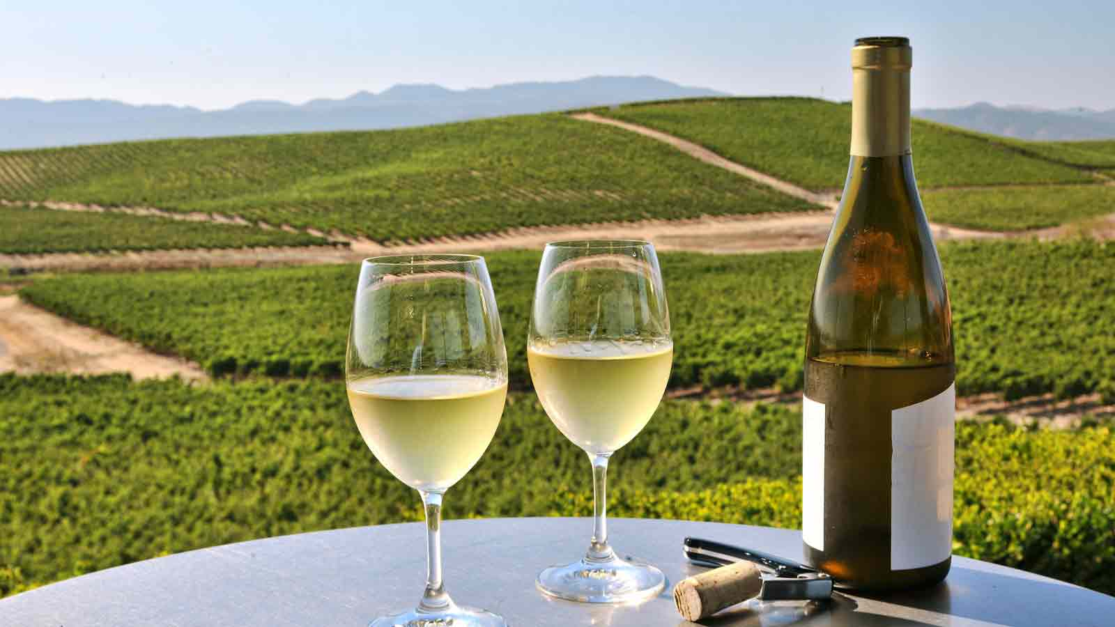 Celebrate All Things Wine At This Month-long Festival In Nashik photo
