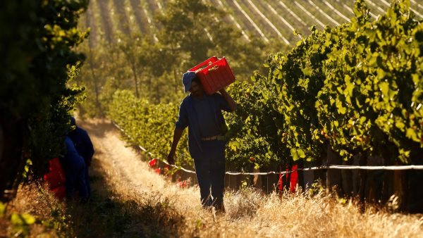 Unsung Wine Workers Honoured With Prestigious 1659 Medal Of Honour photo