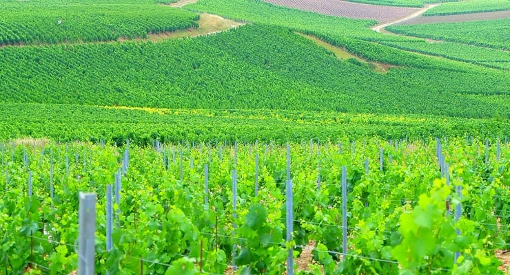 The Best Way To Discover The Champagne Region photo