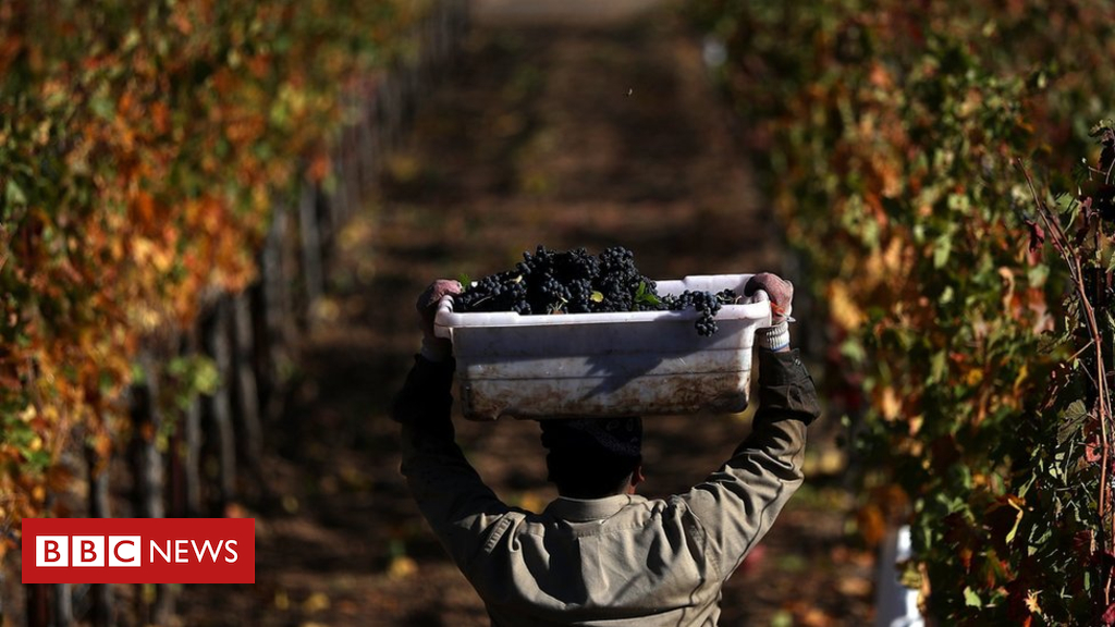 Us Winemakers Feel Crushed By China Tariffs photo