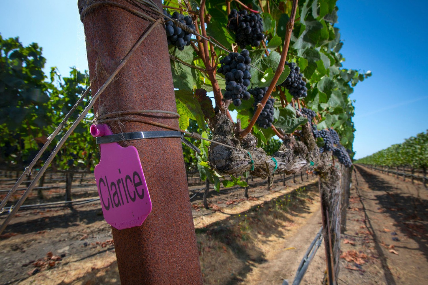 A Veteran Winemaker Throws Out The Wine-selling Playbook photo