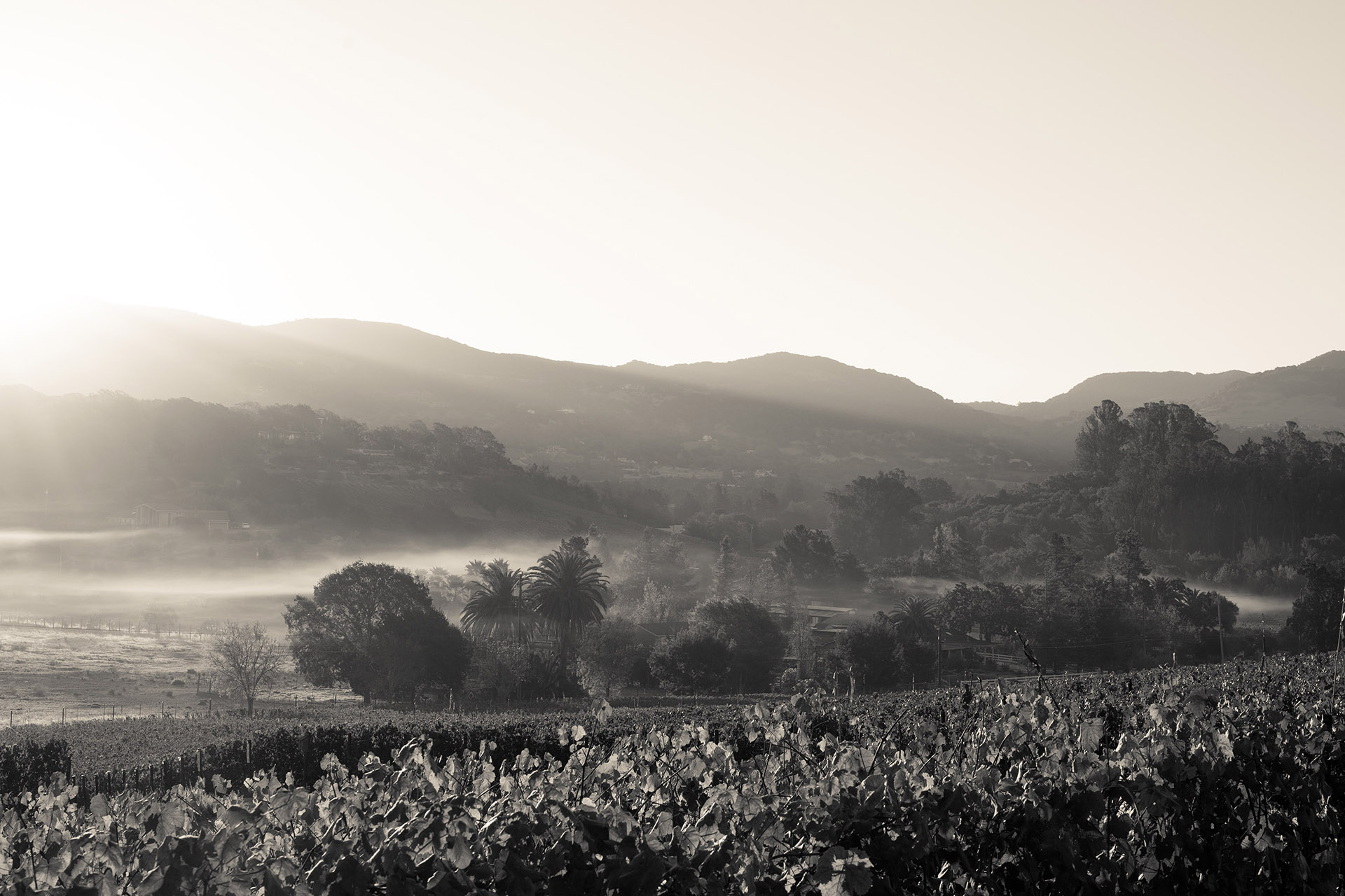 Why Coombsville Is Napa Valley's Rising Star photo