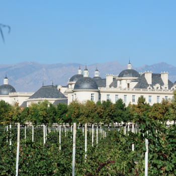 Changyu To Sell Wines From Its Australian Vineyards In June photo