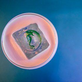 Sexy Fish Bar Ups Sustainability Focus photo