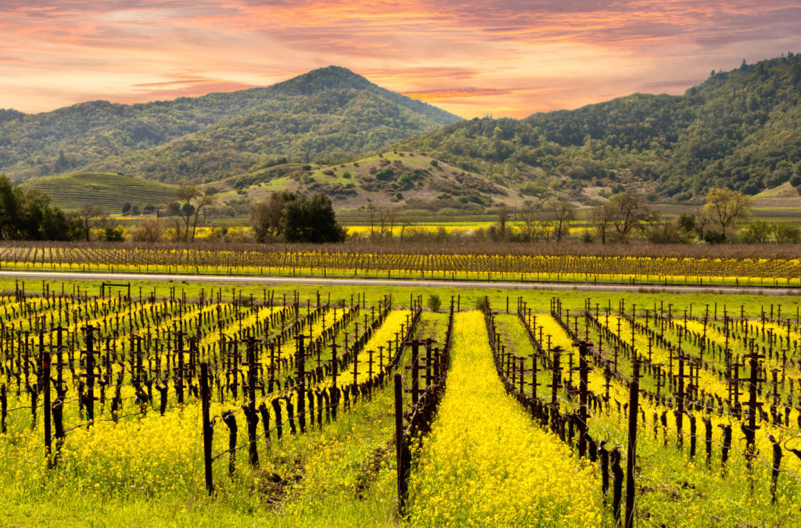 The Best Napa Wineries To Visit In 2018 photo