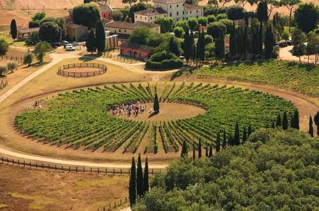 Vino Nobile Di Montepulciano 2015 Preview photo
