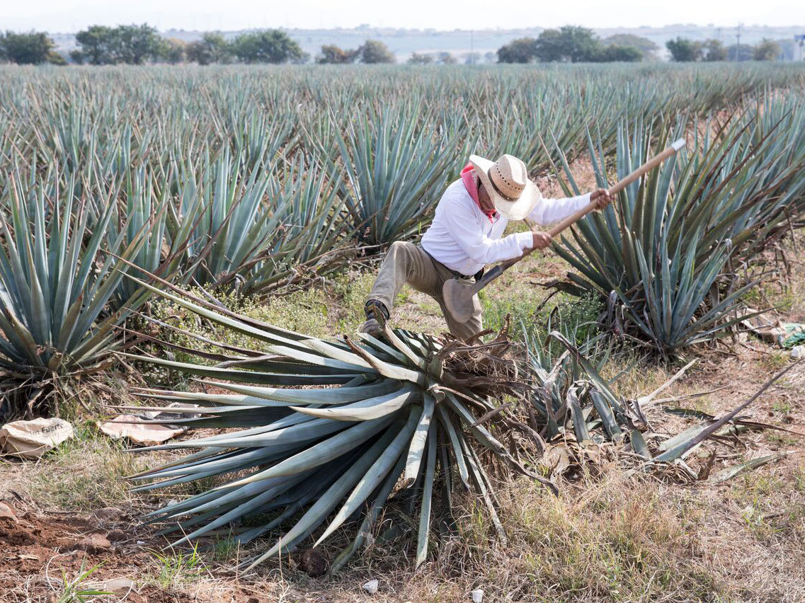 How the Tequila Boom Could Go Bust photo