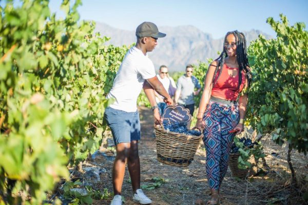 Nederburg Treats National Competition Winners To Harvest Experience Of Note! photo