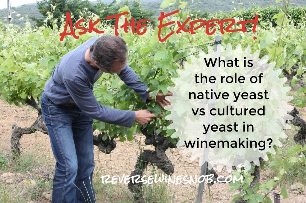 What Is The Role Of Native Yeast Versus Cultured Yeast In Winemaking? photo