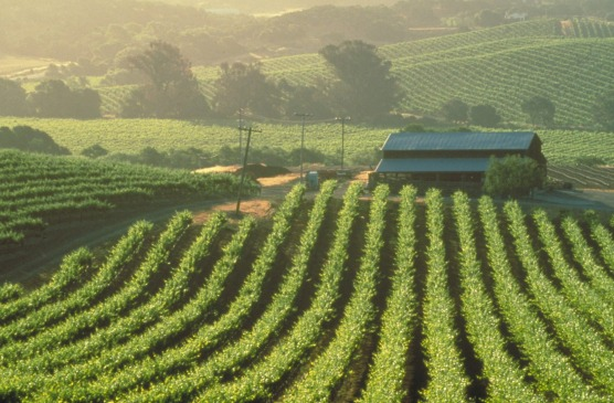 Penfolds Versus Sterling Vineyards. No Trade War Blues For Treasury Wine Estates. photo