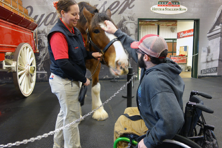 Warm Springs Ranch Celebrates 10th Anniversary Of Breeding Budweiser Clydesdales photo
