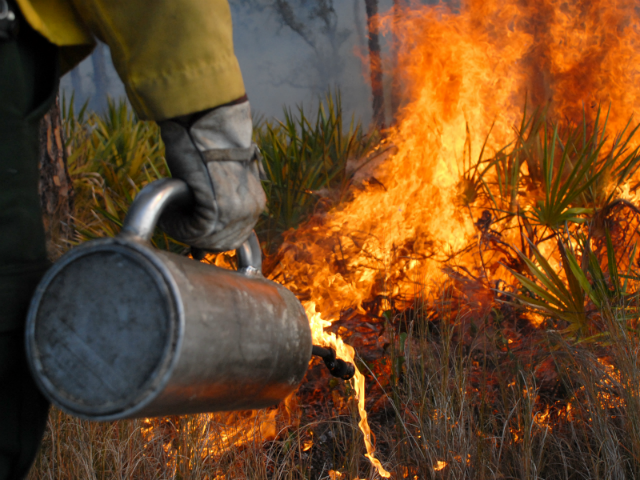 Firefighters To Burn 137 Acres Of Angostura Recreation Area photo