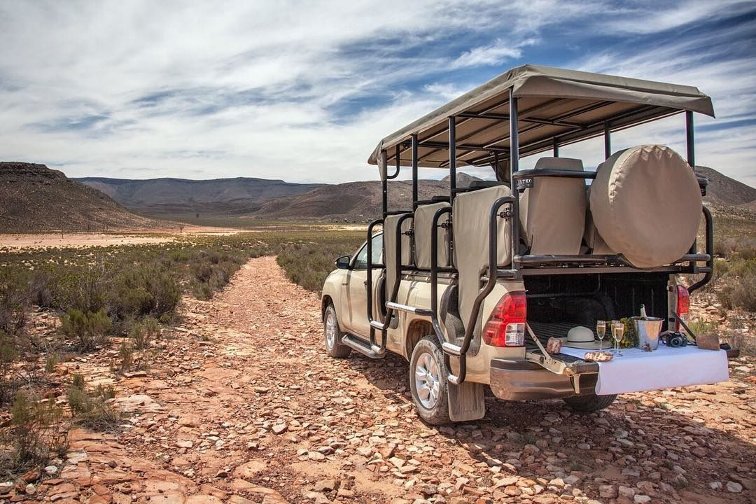 Five Of The Best Safaris In And Around Cape Town photo