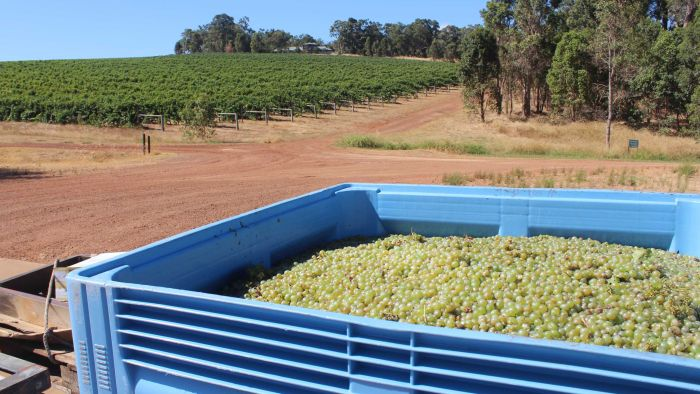 What A Global Shortage Of Wine Means For Australia photo