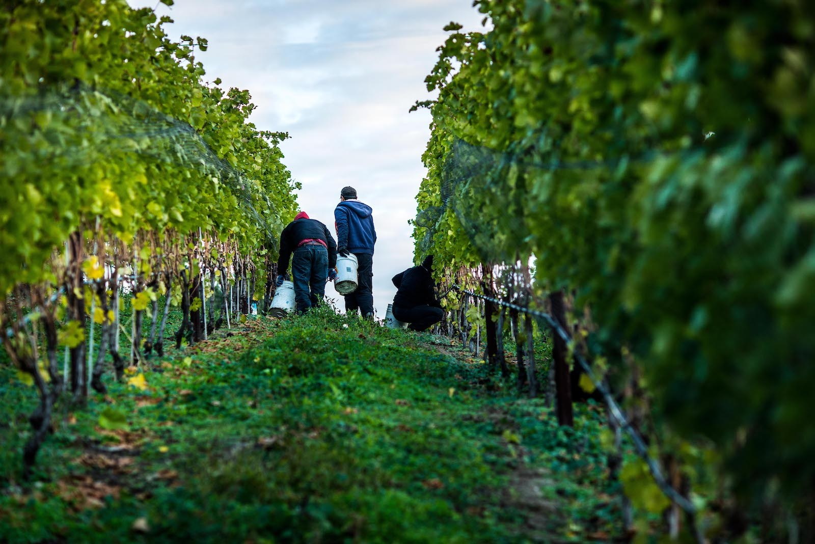 Poplar Grove Winery Names Ingo Grady As Estate Director photo