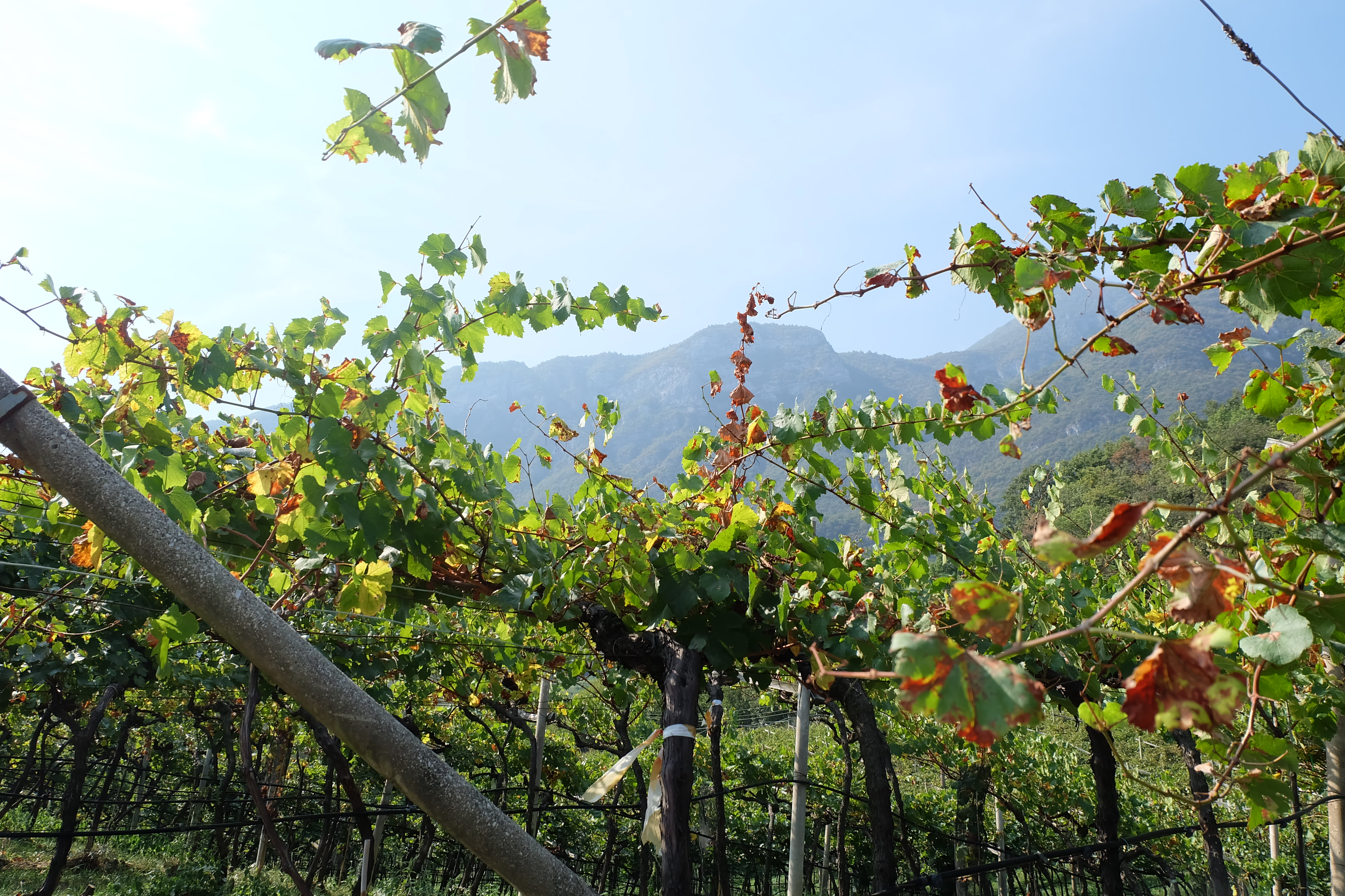 Bisol, From 1542 To The Future Of Prosecco Superiore photo