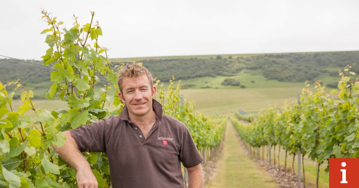 Grape Britain: The Vineyard Manager Growing The English Answer To Champagne photo